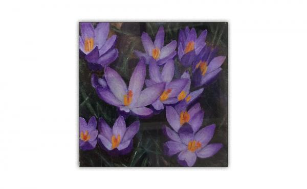 Purple wild crocuses leaning towards the viewer
