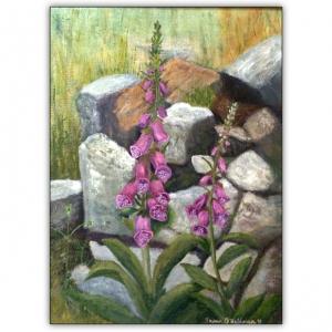 Foxgloves nestled in between rocks